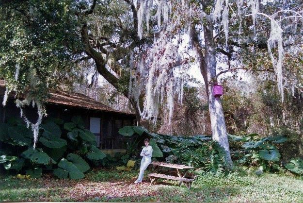 Cabin Rear